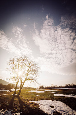 Tree silhouette in winter time with sun flare and blue sky - p968m952951 by Roberto Pastrovicchio
