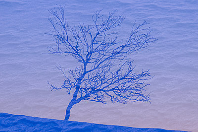 Shadow of tree at snow - p312m2118811 by Johner
