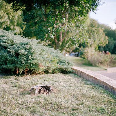 Front garden - p9110529 by Benjamin Roulet