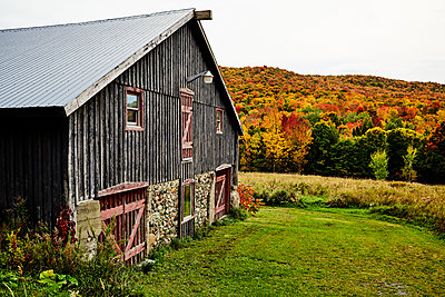 Barn With An Autumn Coloured Forest; Dunham, Quebec, Canada - p442m1499704 by Spencer Robertson