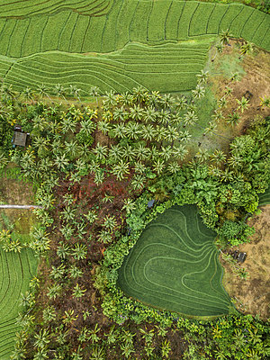 Fields and trees, aerial view - p1108m2141985 by trubavin