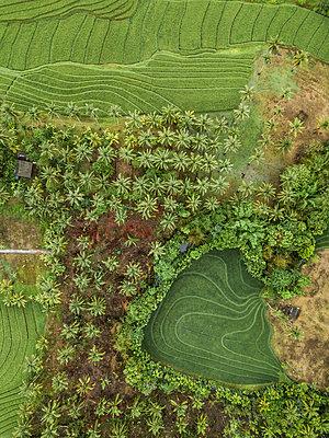 Felder und Bäume, Luftaufnahme - p1108m2141985 von trubavin