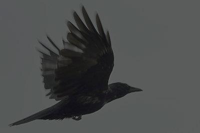 Crow - p876m966743 by ganguin