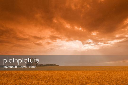 Abandoned farm in durum wheat field, near Assiniboia, Saskatchewan, Canada - p6070529 by Dave Reede