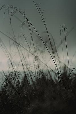 Blades of grass at twilight - p1184m1424106 by brabanski