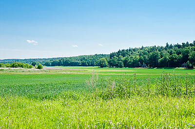 Open field bordered by forest - p312m1552200 by Scandinav Images