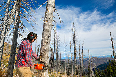 Man Cutting Down A Dead Tree In The Forest While Camping In Montana - p343m1218109 by Craig Moore