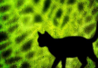 Die Katze - p4500176 von Hanka Steidle