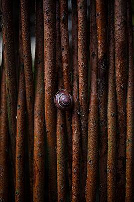 Schnecke an Holzwand - p045m1181863 von Jasmin Sander