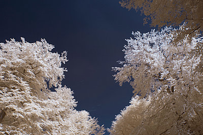 Spooky trees - p178m1044380 by owi