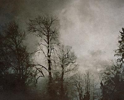 Forest - p945m2229716 by aurelia frey