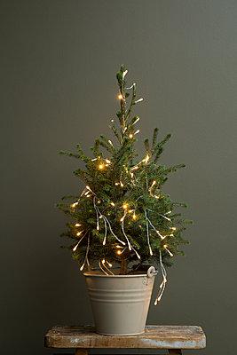 Kleiner Weihnachtsbaum in Metalleimer nur mit einer Lichterkette geschückt - p948m2134935 von Sibylle Pietrek