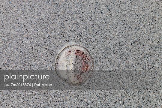 Qualle - p417m2015374 von Pat Meise