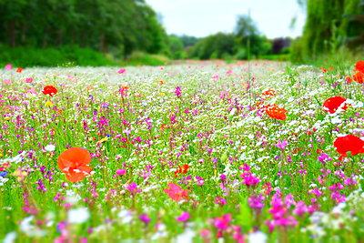 Flower field - p148m2111288 by Axel Biewer