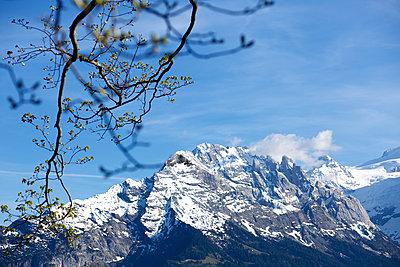 Frühlingserwachen in den Bergen - p606m1462357 von Iris Friedrich