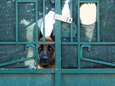 Watchdog - p1066m954893 by Ulrike Schacht