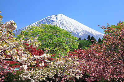 Mount Fuji - p307m896939f by SHOSEI