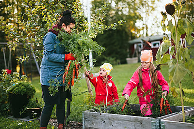 Mother with daughters on vegetable patch - p312m2191125 by Matilda Holmqvist