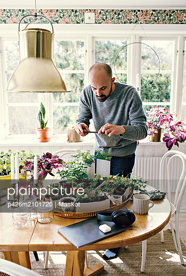 Man photographing plants on table in room against window at home - p426m2101720 by Maskot