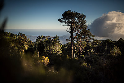 View on the sea from the mountains - p1007m1540383 by Tilby Vattard