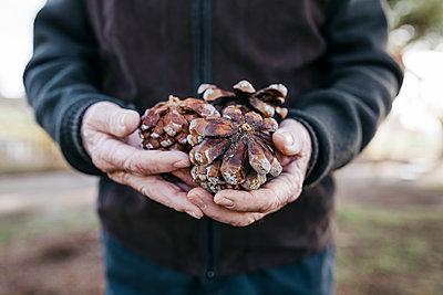 Spain, Barcelona. Elderly man's hands with pine cones on them - p300m2166576 von Josep Rovirosa