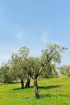 Olivenhain - p949m658215 von Frauke Schumann