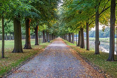 Germany, Lower Saxony, Hanover, Herrenhaeuser Gaerten, alley in autumn - p300m2062420 by Patrice von Collani