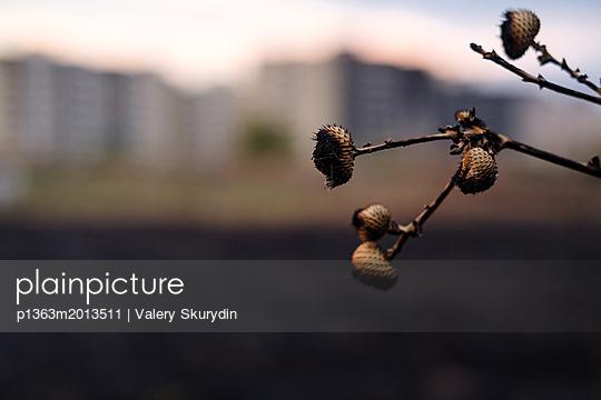 p1363m2013511 von Valery Skurydin