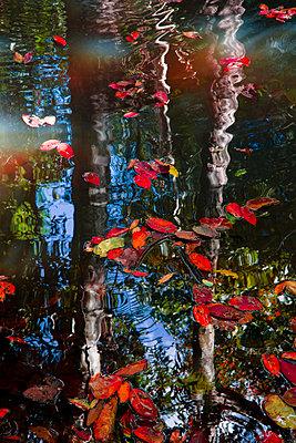 Blätter auf einem Gewässer - p1032m1220659 von Fuercho