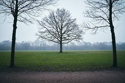 Kahle Bäume im Stadtpark, Hamburg - p1696m2296573 von Alexander Schönberg