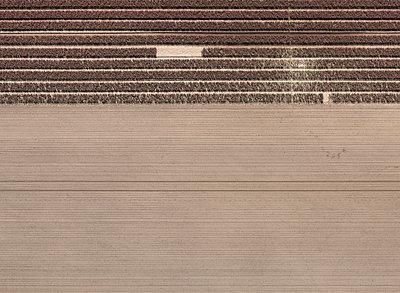 Full frame shot of agricultural landscape - p301m1406269 by Stephan Zirwes