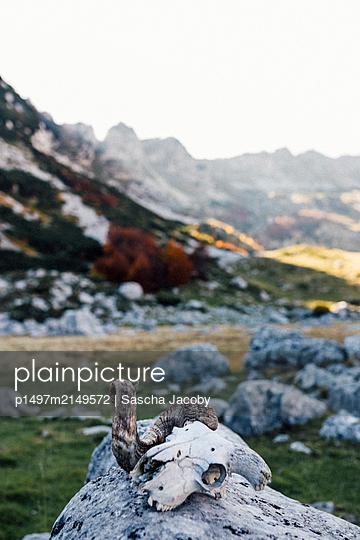 Tierschädel auf Felsen in den Bergen des Durmitor Nationaparks, Montenegro - p1497m2149572 von Sascha Jacoby
