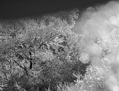Korkeichen; Guadalupe; Andalusien - p1016m815734 von Jochen Knobloch
