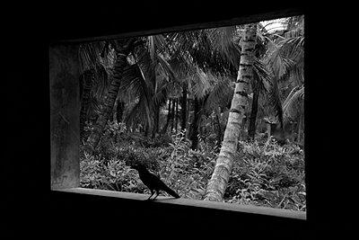 Blick in die Natur - p1189m1017031 von Adnan Arnaout