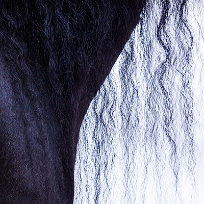 Detail of frisian horse, horse's mane - p300m2004645 by Tom Chance
