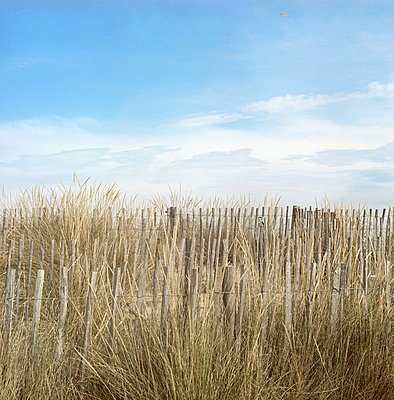 Dunes in southern France - p387m939697 by Patricia Eichert