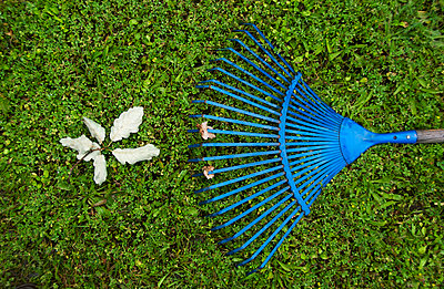Blue rake and a green leaf of oak - p8130098 by B.Jaubert