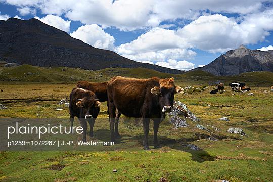 Nutztiere - p1259m1072287 von J.-P. Westermann