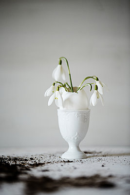 Snowdrops in eggshell - p1239m2272797 by Krista Keltanen