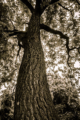 Old tree - p1256m2098973 by Sandra Jordan