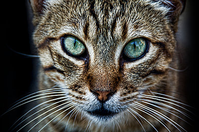Cat with green eyes - p1445m2125677 by Eugenia Kyriakopoulou