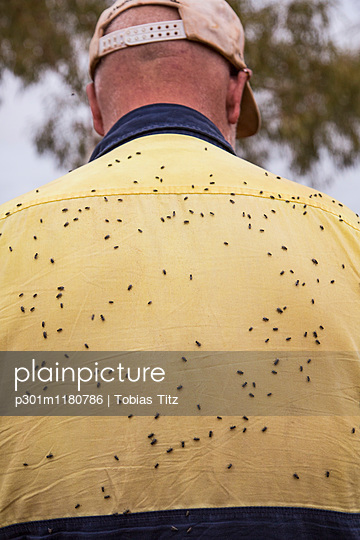 Rear view of man with flies covering his back - p301m1180786 by Tobias Titz
