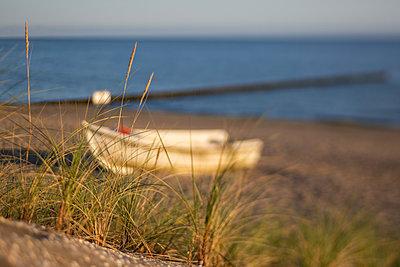 Grass growing on sandy coastal beach - p300m2220522 by Anke Scheibe