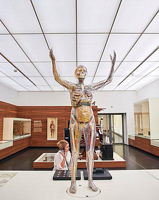 Transparent woman Hygiene Museum Dresden - p390m1221955 by Frank Herfort