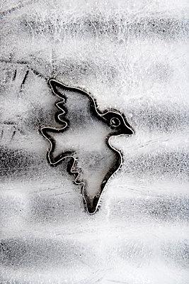 Eisvogel - p451m972652 von Anja Weber-Decker