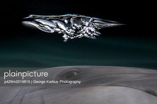 p429m2019819 von George Karbus Photography