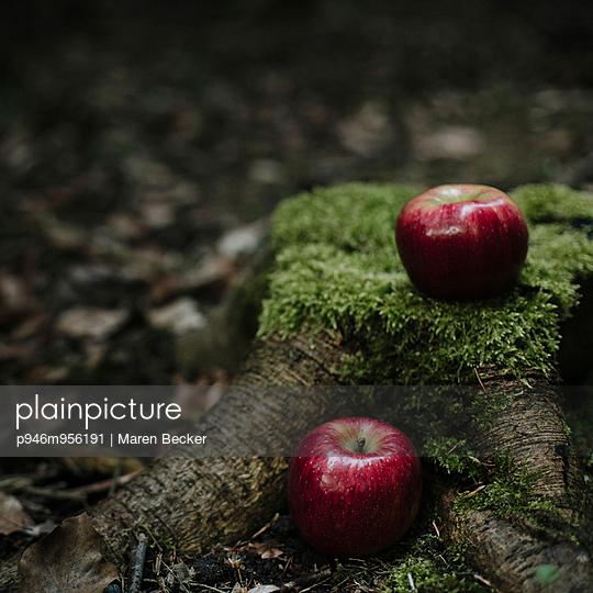 Äpfe auf mossbewachsenem Baumstumpf - p946m956191 von Maren Becker