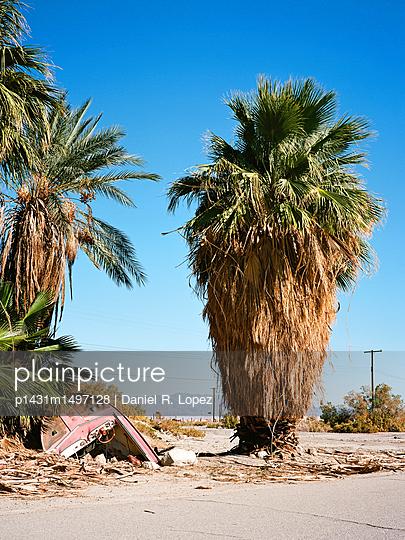 Buried Alive - p1431m1497128 by Daniel R. Lopez
