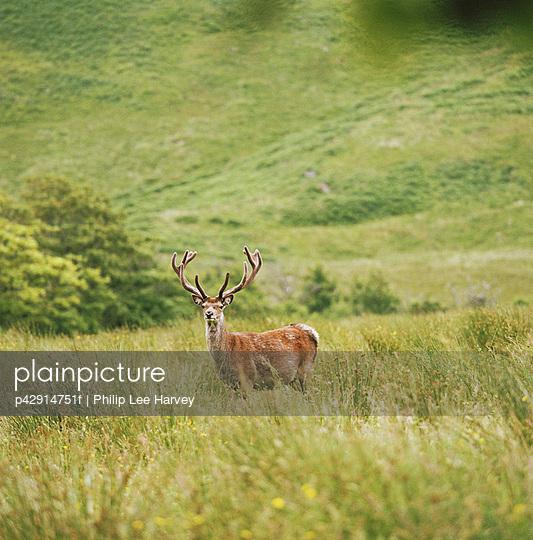 p42914751f von Philip Lee Harvey