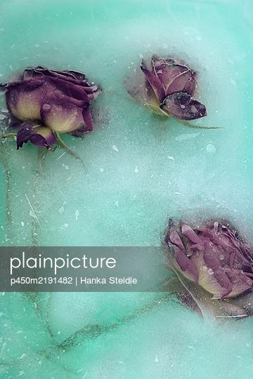 Frozen roses - p450m2191482 by Hanka Steidle